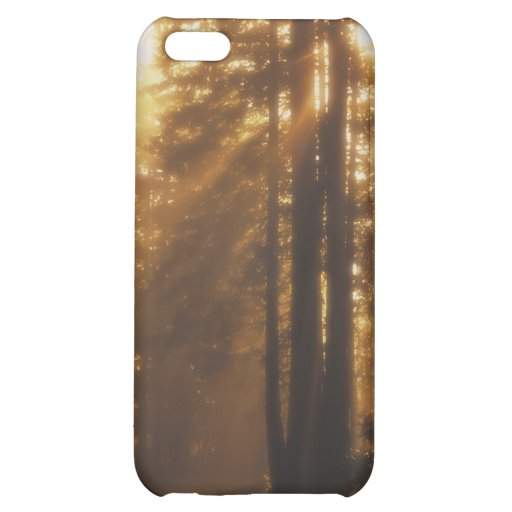 Sunbeams Cover For iPhone 5C