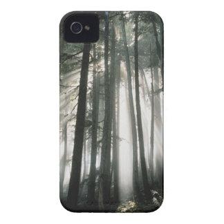 Sunbeams streaming through trees, Mount Rainier Case-Mate iPhone 4 Case
