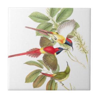 Sunbird Birds Wildlife Animals Botanical Ceramic Tile