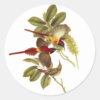 Sunbird Fuego-atado Pegatina Redonda