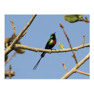 Sunbird hermoso tarjetas postales