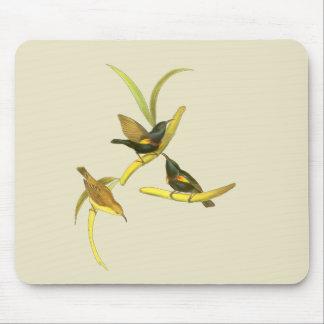 Sunbird púrpura tapetes de ratones