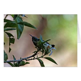 Sunbird variable en Etiopía Tarjeta De Felicitación