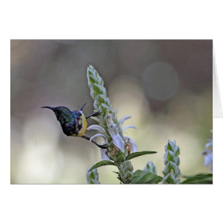 Sunbird variable en la África del Este Tarjeta De Felicitación