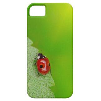 Sunburst above tiny ladybird climbing up a fresh iPhone SE/5/5s case