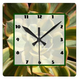 Sunburst Aeonium 1 Square Wall Clock