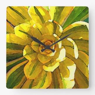 Sunburst Aeonium Succulent Square by Amy Vangsgard Square Wallclocks