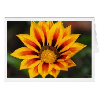 Sunburst Card