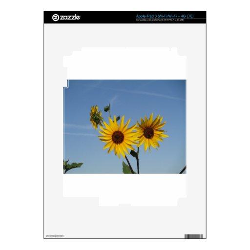Sunburst Decals For iPad 3