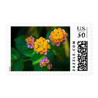 Sunburst Stamp
