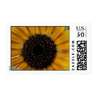 Sunburst Sunflower Postage