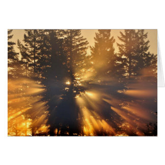 Sunburst through Douglas Firs - Frameable Art Card