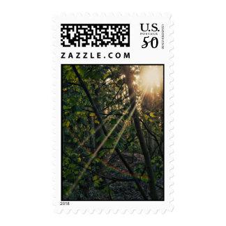 Sunburst through the trees postage stamps