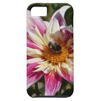 Sunday Activity iPhone SE/5/5s Case