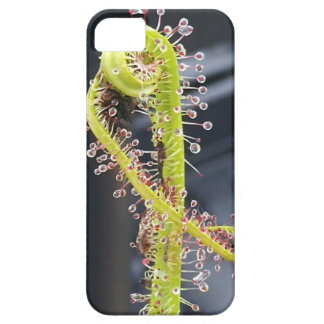 Sundew case for iphone 5