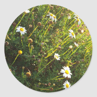 sundown daisy classic round sticker