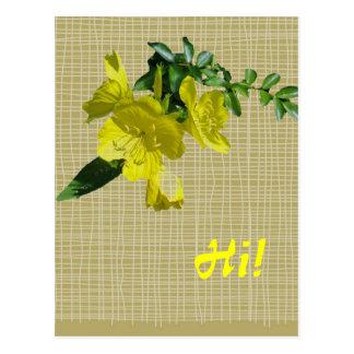 Sundrops Primrose Coordinating Items Postcard