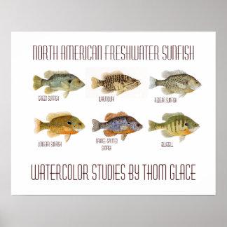 Sunfish de agua dulce norteamericano póster