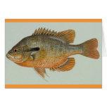 Sunfish de Redbreast - auritus del Lepomis Tarjetón