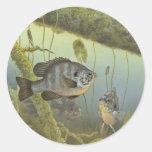 Sunfish de Redear Pegatina Redonda