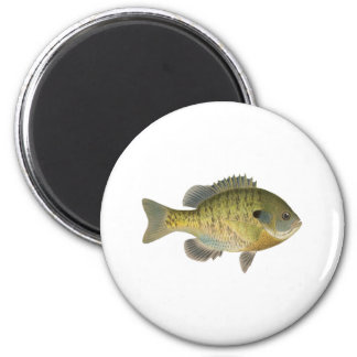 Sunfish del Lepomis macrochirus - brema Imán Redondo 5 Cm