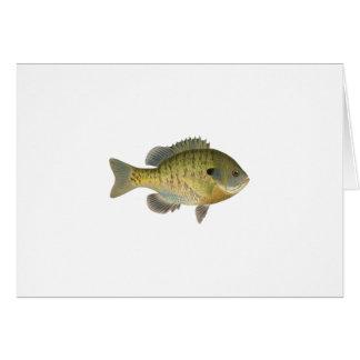 Sunfish del Lepomis macrochirus - brema Tarjeton
