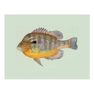 Sunfish del Raver de Duane Tarjeta Postal