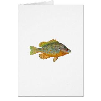 Sunfish manchado naranja felicitacion
