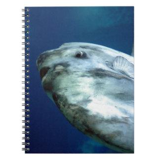 Sunfish Mola Mola 001 Spiral Note Books