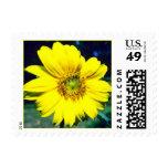 sunflower2 postage stamp