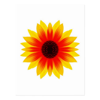 Sunflower.009 Postal