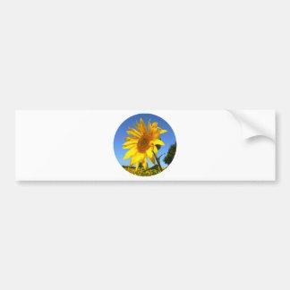 Sunflower 01.1rd, Field of Sunflowers Bumper Sticker