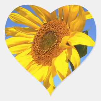 Sunflower 01.1rd, Field of Sunflowers Heart Sticker