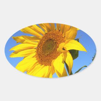 Sunflower 01.1rd, Field of Sunflowers Oval Sticker