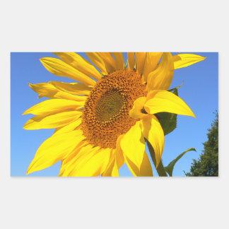 Sunflower 01.1rd, Field of Sunflowers Rectangular Sticker