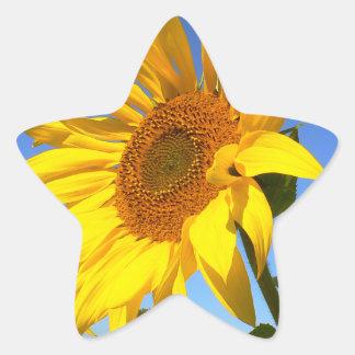 Sunflower 01.1rd, Field of Sunflowers Star Sticker