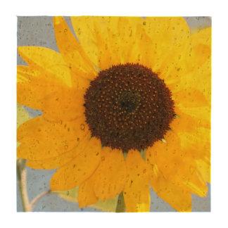 sunflower-11 drink coaster
