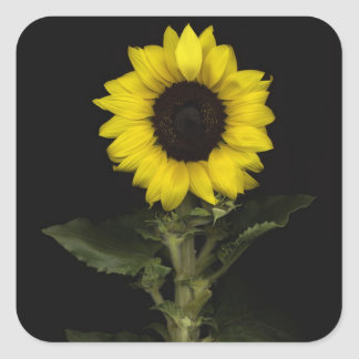 Sunflower 11 sticker