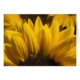 sunflower 1 card