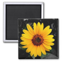 Sunflower 2 2 inch square magnet