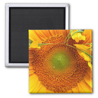 Sunflower 2 Inch Square Magnet