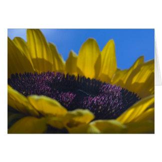 Sunflower 4 card