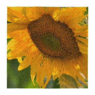 sunflower-84 coaster