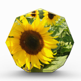Sunflower Acrylic Award