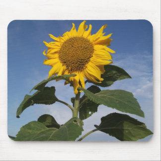 Sunflower against blue sky mouse pad