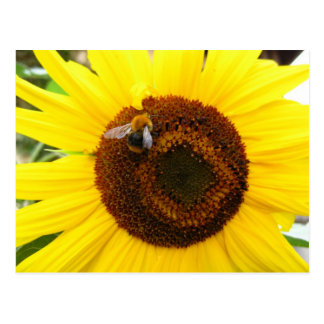Sunflower and a Bee Post Card