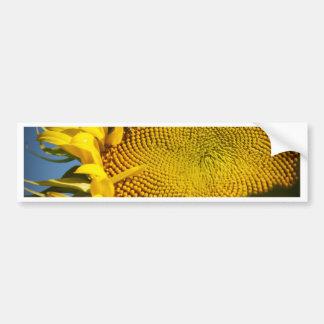 Sunflower and Bee Bumper Sticker