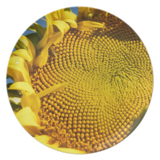 Sunflower and Bee Melamine Plate