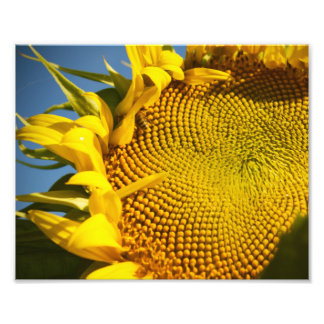 Sunflower and Bee Photo Print