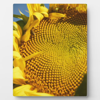 Sunflower and Bee Plaque